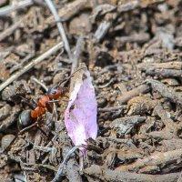 уборка муровейника :: Михаил Шпигельман