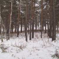 В нашем городе снег :: alemigun