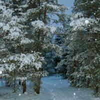 Зима :: Валерия Ширковцова