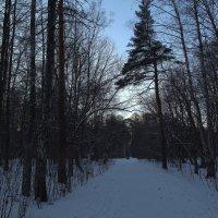 ***драгоценный декабрьский снег :: Александра