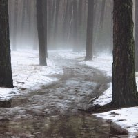 Природы небывалые капризы...в декабре!.. :: Лесо-Вед (Баранов)