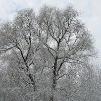 Снегопад :: Василий Парамонов