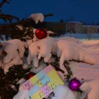 Письмо Деду Морозу :: Ольга