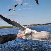 На Белом море :: Валерий Толмачев