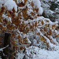 первый снег :: Tatiana Lesnykh Лесных