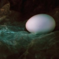 Просто яйцо. :: Анатолий. Chesnavik.