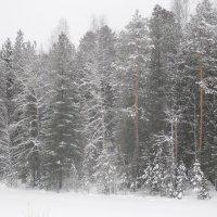 А снег все идет и идет :: Наталья Пендюк Пендюк