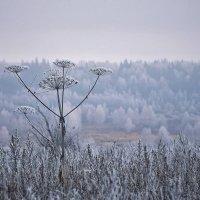 Морозное утро... :: Roman Mordashev