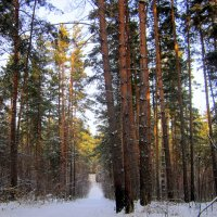 В лесу солнечный зимний день . :: Мила Бовкун
