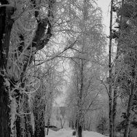 Зима :: Алексей Обухов