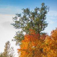 Осенняя рябина :: Виталий