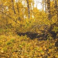 Осенняя поляна :: Ренат Фахрутдинов