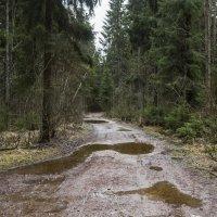 Декабрьский лес :: Aнна Зарубина