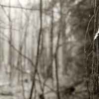 Семнадцать Мгновений Весны :: Виктор | Индеец Острие Бревна