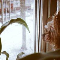 а за окном зима :: Ксения Клындюк