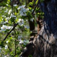 Весна :: ཨོཾ Roland