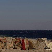 Корабли пустыни :: Алексей Соминский
