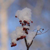 Снежинка :: Светлана Винокурова