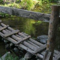 Тихие струи лесного ручья :: Ирина Васильева
