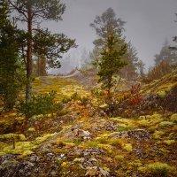 лес на камнях :: Ирэна Мазакина
