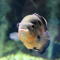рыбка :: Катя Медведева