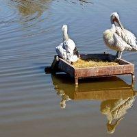 """Парк птиц """"Воробьи"""" :: Евгений Жиляев"""