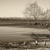 На речке, да на Каюковке в разлив... :: Андрей Селиванов