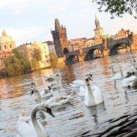Прага :: Мария Подопригора