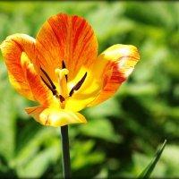Весна :: Евгеша Сафронова
