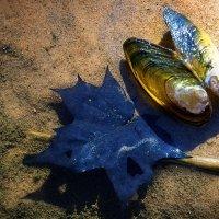 О бабочке- ракушке,и синем как море листочке.... :: Ирэна Мазакина
