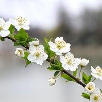 Весна :: Zalim Khatuev