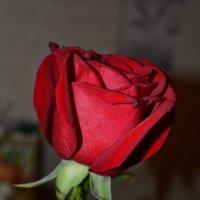 розы алые :: Надежда Кузнецова