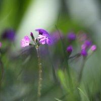 Цветочки :: Наталья Лузинова
