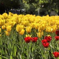 Городские цветы (май) :: Pavel Stolyar