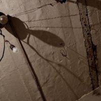 Теневой муравей :: Евгения Платонова