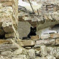 Кошак :: Евгения Платонова