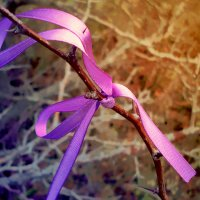 Dark violet :: Natalia Koroleva