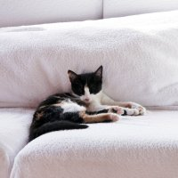 Кошка :: Полина Адрианова