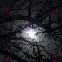 Солнце заблудилось :: Антон Емельянов