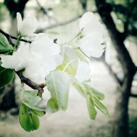 весна наступила :: Катя Полуянова