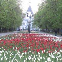 Девичье поле :: Маера Урусова