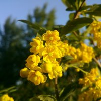 Желтое :: Maria Milova