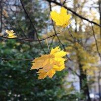 Осень :: текила *