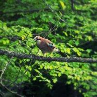 Птица :: Александр Терещук