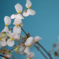 цветы :: valeriy g_g