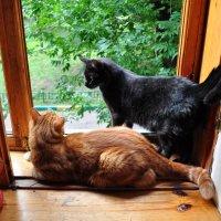 Мои любимые коты Кокос и Кузьма!!! :: Виталий Виницкий