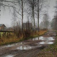 Меж берез и сосен тихо бродит осень... :: Евгений Плетнев
