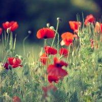 Весна :: надежда корсукова