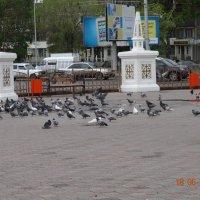 Любимое место местных голубей :: Анна Фряуф