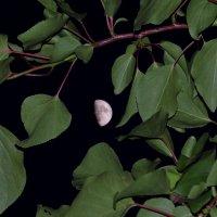 Луна :: Александр Анатольевич
